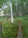 Vandrarhem i Karlstad - Naturskön vandringsled i omgivningen  - Villa Gräsdalen