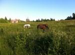Vandrarhem i Karlstad - Hästhage alldeles nedanför huset  - Villa Gräsdalen
